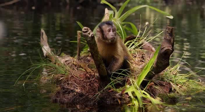 Амазония: Инструкция по выживанию смотреть