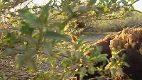 BBC: Безжалостные убийцы Сезон-1 4 серия