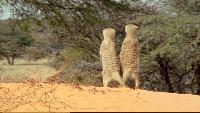BBC: Дикая Африка Сезон-1 Серия 3
