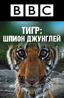 BBC. Тигр: Шпион джунглей смотреть