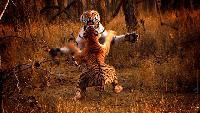 BBC. Тигр: Шпион джунглей Сезон-1 Серия 1
