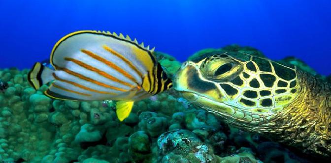 Большое путешествие вглубь океанов смотреть