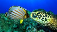 Большое путешествие вглубь океанов