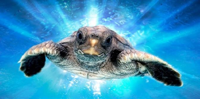 Большое путешествие вглубь океанов: Возвращение смотреть