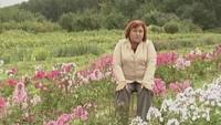 Цветочные истории 1 сезон Флоксы