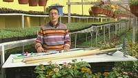 Дачные истории  сезон Посадка картофеля, огурцов и кабачков