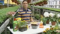 Дачные истории  сезон Работы в саду в конце апреля