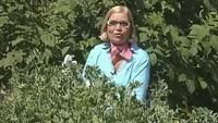Дачные истории 1 сезон Секреты выращивания гороха и тыквы