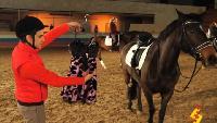 Даёшь молодёжь! Разные истории Нужный подход к лошади