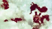Диакниги Сезон-1 Медвежонок и снеговик