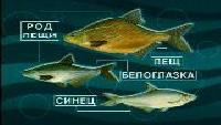 Диалоги о рыбалке Сезон-1 Лещ. Часть 3