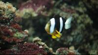 Факультатив Сезон-1 Наука: Секрет рыбоводства