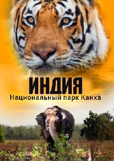 Индия: Национальный парк Канха смотреть