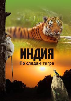 Индия: По следам тигра смотреть