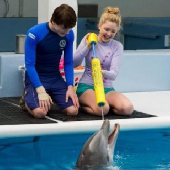 «История дельфина 2» не обошлась без Моргана Фримена смотреть