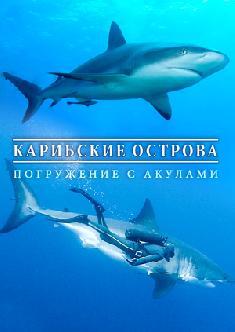 Карибские острова: Погружение с акулами смотреть