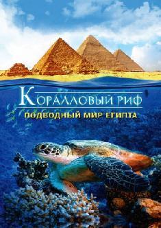 Коралловый риф: Подводный мир Египта смотреть
