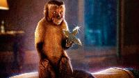 Кто твоя обезьянка?