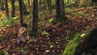 LOL Ржунимагу Эпизоды Таинственный лес