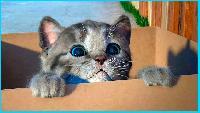 Маленький Котёнок и детская комната Виртуальный котик как в мультике Симулятор Котёнка