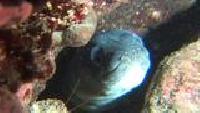 Мир подводной охоты Сезон-1 Охота на Адриатике