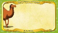 Мультипедия животных Английский алфавит Английский алфавит - Letter C - Camel