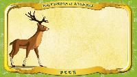 Мультипедия животных Английский алфавит Английский алфавит - Letter D - Deer