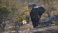 Основной инстинкт (2009) Сезон-1 Слоны и охота