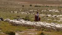 Патагония: По следам Дарвина Сезон 1 От Камаронес до горы Дарвина
