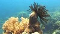 Под водой с... Сезон-1 Макросъемка животного мира