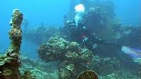 Под водой с... Сезон-1 Палау. Рэки