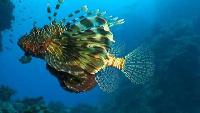 Под водой с... Сезон-1 Тоби Арба