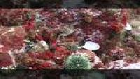 Предельная глубина (2009) Сезон-1 Баренцево море