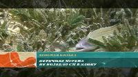 Предельная глубина (2009) Сезон-1 Мелководье Красного моря