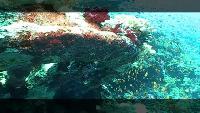 Предельная глубина (2009) Сезон-1 Острова Бразерс