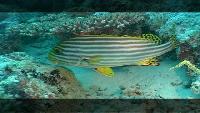 Предельная глубина (2009) Сезон-1 Предельная глубина на Мальдивах Часть 2