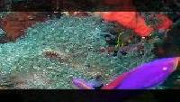Предельная глубина (2009) Сезон-1 Рифы острова Апо
