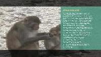 Предельная глубина (2009) Сезон-1 Вьетнам. Остров обезьян