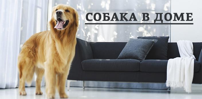 Собака в доме смотреть