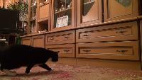 Thoisoi Котэ Котэ - Говорящая кошка и мыльные пузыри