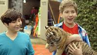 Тигриный хвост