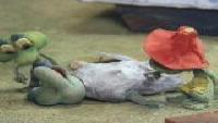 Три лягушонка Сезон-1 Серия 2
