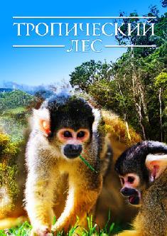 Тропический лес смотреть