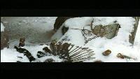 Живая история Сезон-1 Живая история. Ксения Раппопорт. Портрет незнакомки