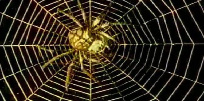 Золотой паук смотреть